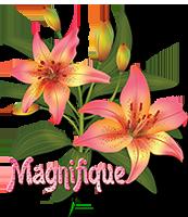 Cadeau ~ tutoriel de Franie Margot ~ GZ0mW