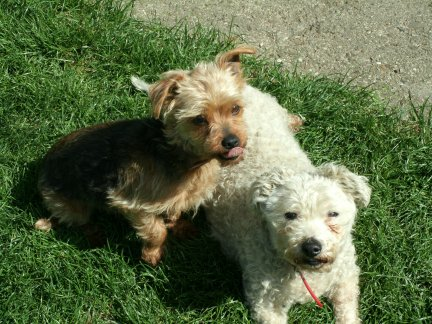 Mes chiens, Nougat et Biscotte GbqWK