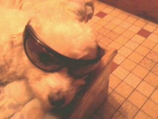 Mes chiens, Nougat et Biscotte - Page 2 Gbqp5