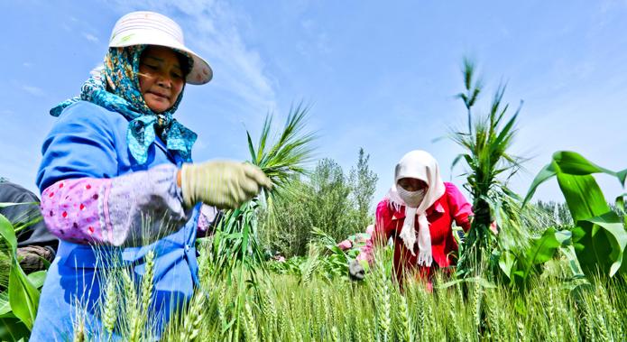 Les réformes dans l'agriculture chinoise