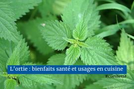 Dernier article plante sauvage comestible et médicinale Heureux qui comme Maurice