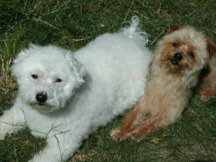 Mes chiens, Nougat et Biscotte - Page 2 Kb2GJ