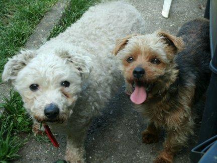 Mes chiens, Nougat et Biscotte Kb2a9