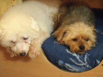 Mes chiens, Nougat et Biscotte - Page 2 MbRGm