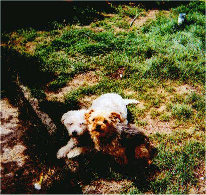 Mes chiens, Nougat et Biscotte MbRnm