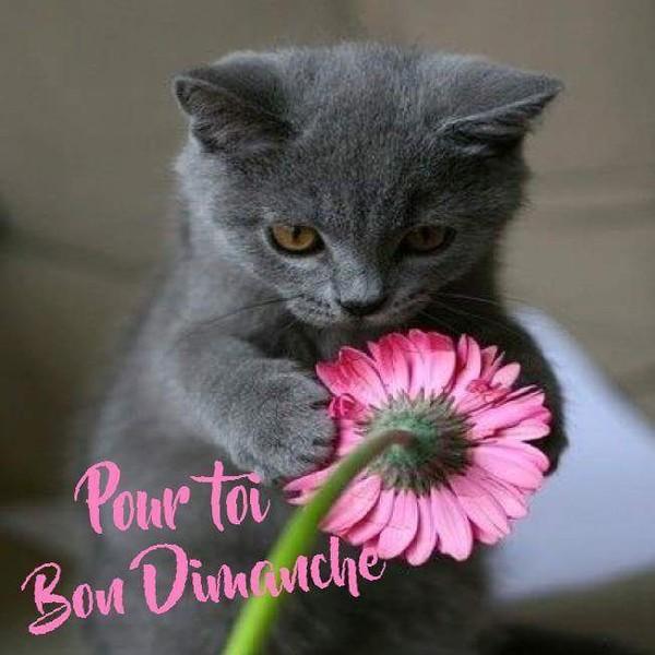 Bonjour, bonsoir..... - Page 34 N0KdQ