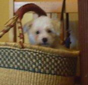 Mes chiens, Nougat et Biscotte - Page 2 NbZLb