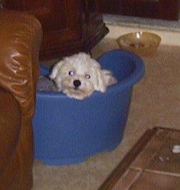 Mes chiens, Nougat et Biscotte - Page 2 Ob95G