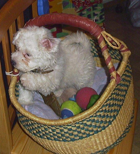 Mes chiens, Nougat et Biscotte - Page 2 Pk1rv