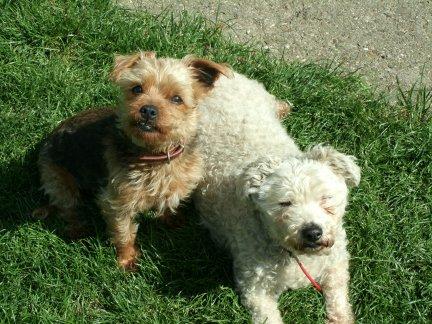 Mes chiens, Nougat et Biscotte QVbX9