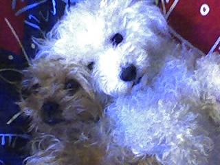 Mes chiens, Nougat et Biscotte - Page 2 QVbkJ