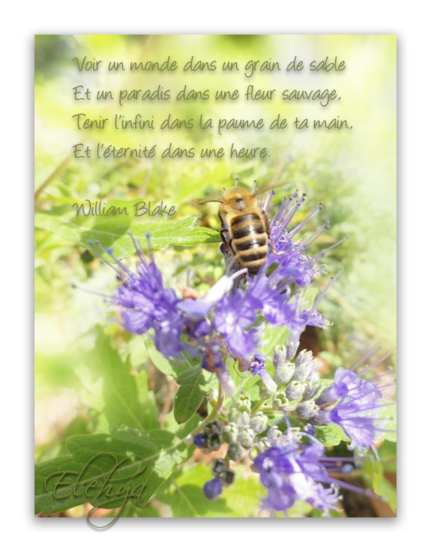 Marcher dans la Beauté... - Page 3 Vlq9g