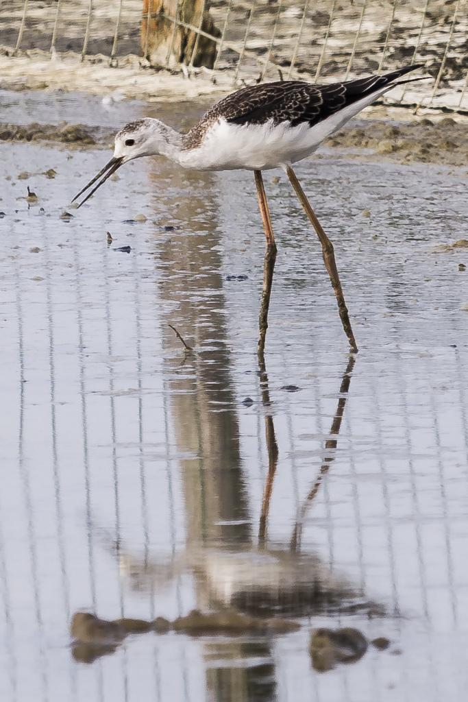 Sortie à la réserve ornithologique du Teich - 24 août 2018 - Page 4 WQ1r4
