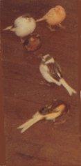 Mes oiseaux We15Z